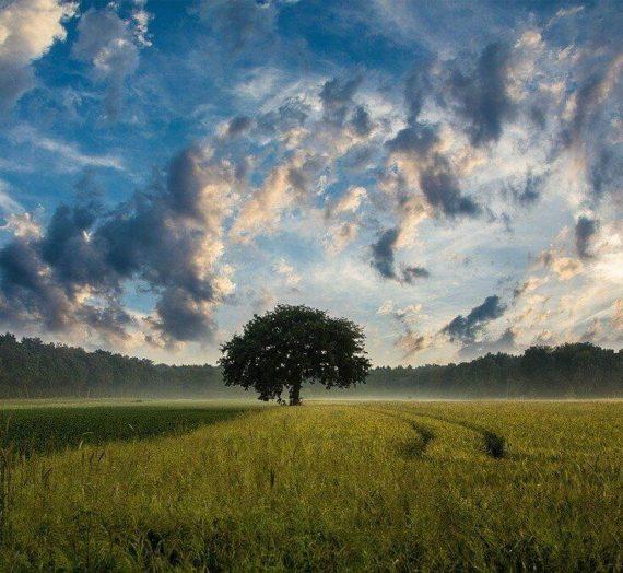 Le zéro déchet, une solution pour aller mieux lorsqu'on souffre d'éco-anxiété
