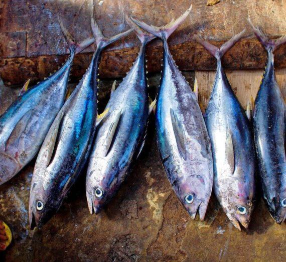 La vérité sur la pêche au thon: Cash Investigation