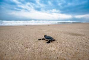 Préserver les océans grâce à des gestes simples du quotidien