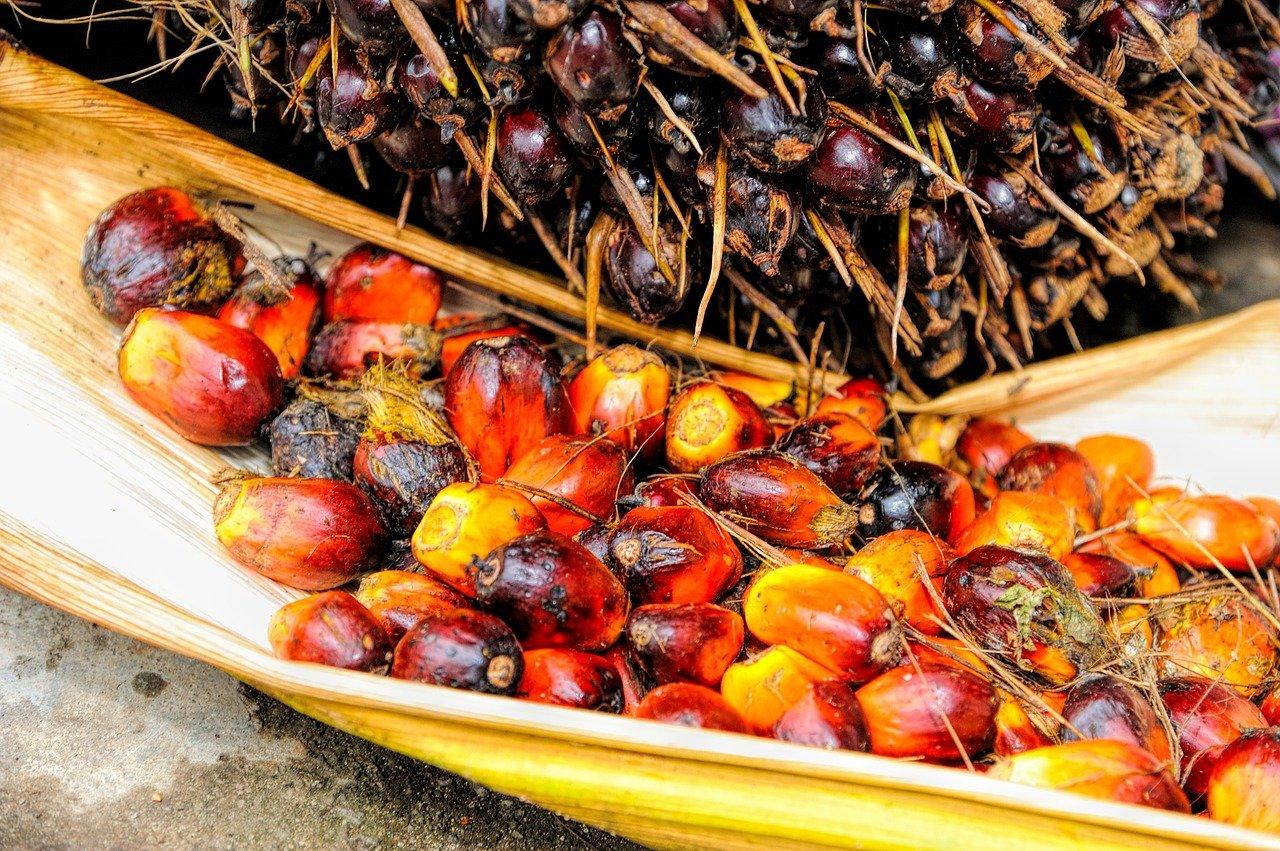 Pourquoi l'huile de palme est-elle problématique ?